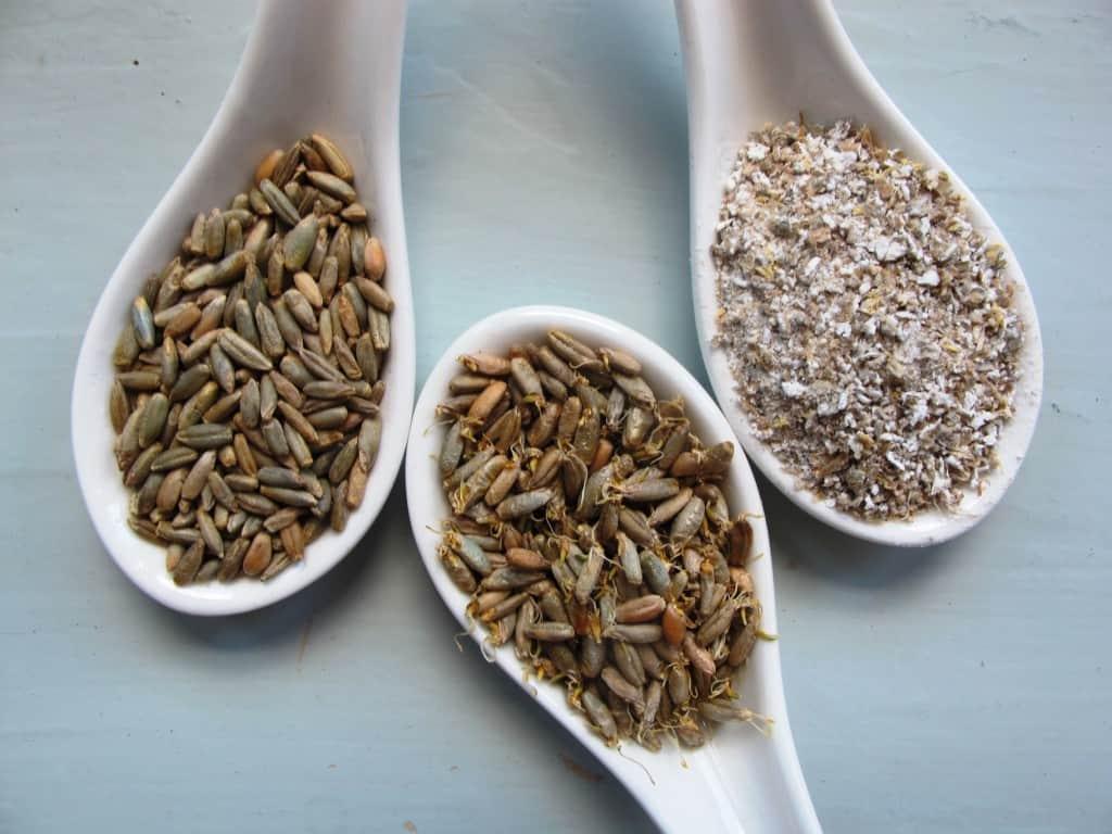 Rye, malted rye grains, malted rye flour